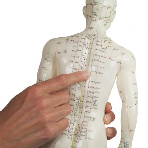 showing some points on the acupuncture doll